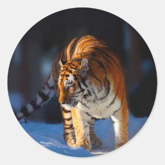 Amur Tiger on white snow Stickers