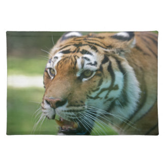 Amur tiger (Panthera tigris altaica) portrait Cloth Place Mat