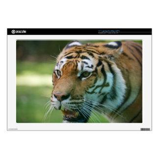 "Amur tiger (Panthera tigris altaica) portrait Skin For 17"" Laptop"