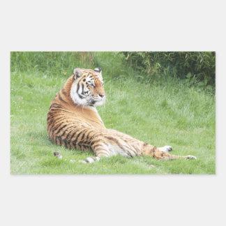 Amur Tiger Sticker