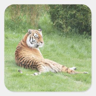 Amur Tiger Stickers