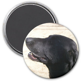 Amy Elizabeth Black Lab Magnet