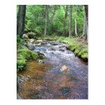 An Acadian Stream Postcard