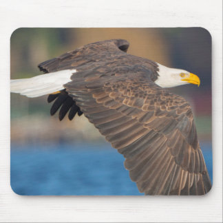 An adult Bald Eagle flies low over water Mouse Pad