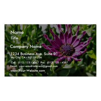 An African Daisy In My Patio Garden Business Card Templates