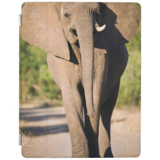 An African Elephant (Loxodonta Africana) Walks iPad Cover
