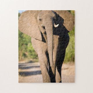An African Elephant (Loxodonta Africana) Walks Jigsaw Puzzles