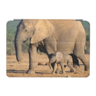 An African Elephant mother and calf on the move iPad Mini Cover