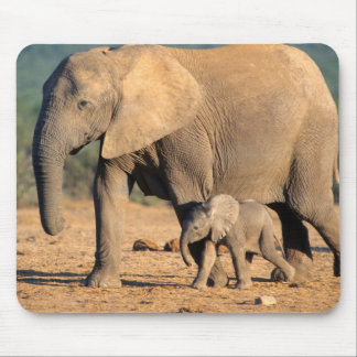 An African Elephant mother and calf on the move Mouse Pad