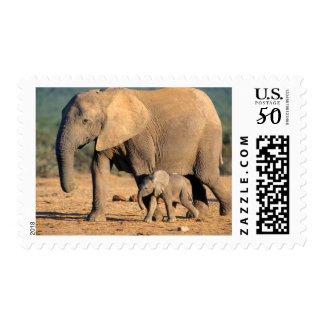 An African Elephant mother and calf on the move Postage