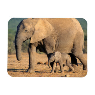An African Elephant mother and calf on the move Rectangular Photo Magnet