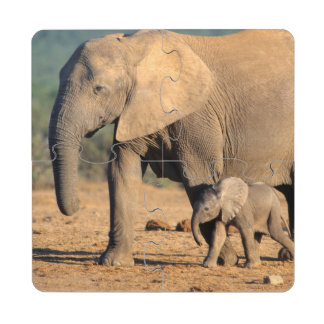 An African Elephant mother and calf on the move Puzzle Coaster