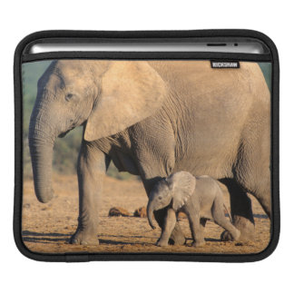 An African Elephant mother and calf on the move Sleeve For iPads