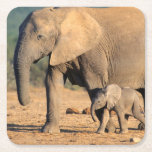 """An African Elephant mother and calf on the move Square Paper Coaster<br><div class=""""desc"""">Gallo Images / DanitaDelimont.com 