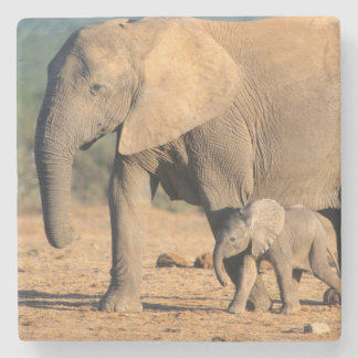 An African Elephant mother and calf on the move Stone Coaster