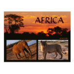 An African Safari Postcard