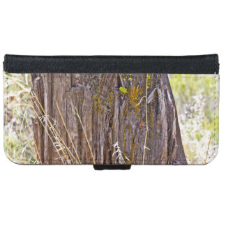 An Aged Tree Stump In The Woods iPhone 6 Wallet Case