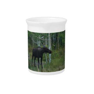 an Alaskan Moose walks around in an Aspen Forest Drink Pitcher
