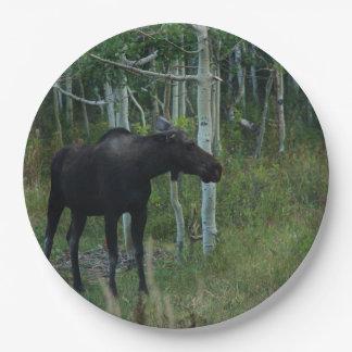an Alaskan Moose walks around in an Aspen Forest Paper Plate