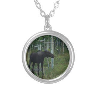 an Alaskan Moose walks around in an Aspen Forest Silver Plated Necklace