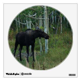 an Alaskan Moose walks around in an Aspen Forest Wall Decal