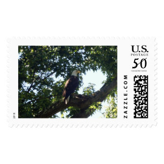 An American Bald Eagle stamp