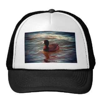 An American Coot Mesh Hat