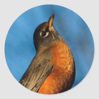 An American Robin Looks Up Classic Round Sticker
