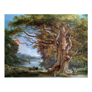 An Ancient Beech Tree, 1794 (oil on canvas) Postcard