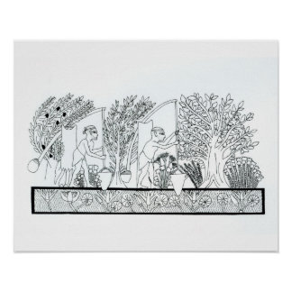 An ancient Egyptian garden (engraving) (b/w photo) Poster