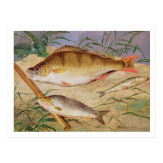 An Angler's Catch of Coarse Fish (oil on panel) Postcard