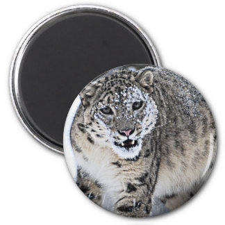 An Angry Snow Leopard Magnet