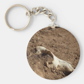 An animal skull covered with dry earth. basic round button keychain