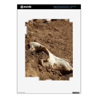 An animal skull covered with dry earth. iPad 3 decal