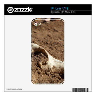 An animal skull covered with dry earth. skin for the iPhone 4
