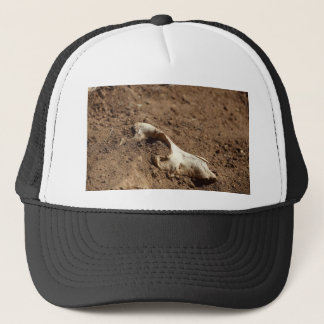An animal skull covered with dry earth. trucker hat