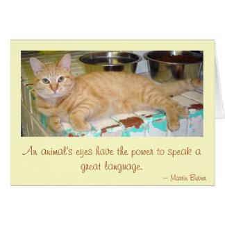 An animal's eyes greeting card