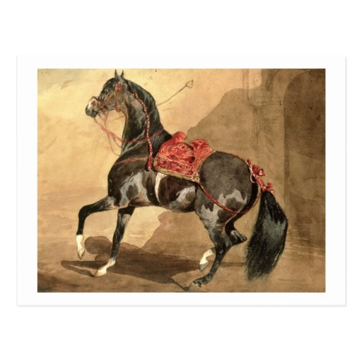 An Arabian Horse (w/c laid down on paper) Postcards