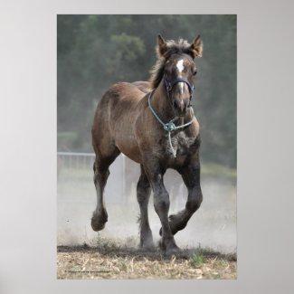 An Ardennais draft horse foal print print