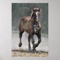 An Ardennais draft horse foal print