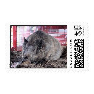 An Arkansas Razorback Postage