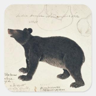 """An Asiatic Black Bear, """"Ursus Tibetanus"""" Square Sticker"""
