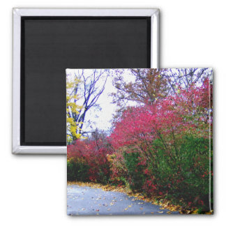 An Autumn Afternoon Walk 2 Inch Square Magnet