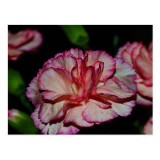 An Autumn Filler Flower Post Card