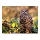 An Eagle Owl Postcard
