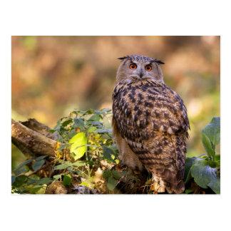 An Eagle Owl Postcards
