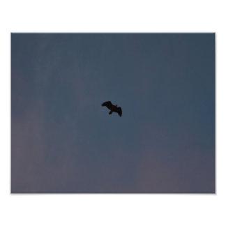 An Eagle Soars High Photo Print