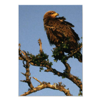 an eagle up on a branch card