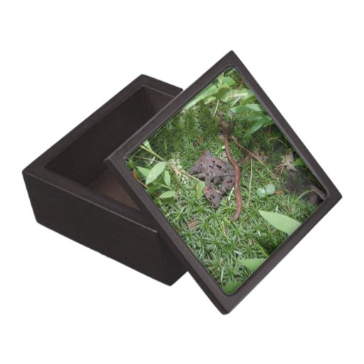 An Earthworm Gift Box