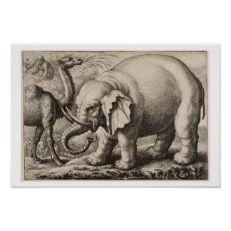 An Elephant and a Camel, engraved by Wenceslaus Ho Poster